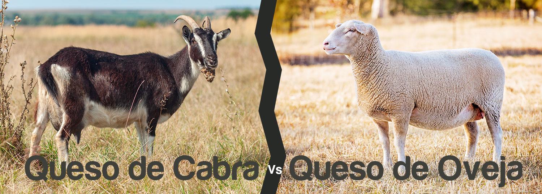 Queso de Cabra contra Queso de Oveja